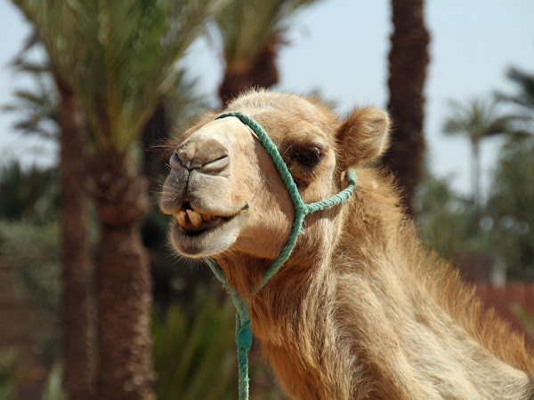 Travel Wishlist: North Africa