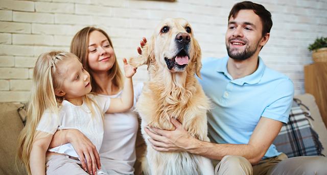 evde-hayvan-besleyerek-edinilen-kazançlar