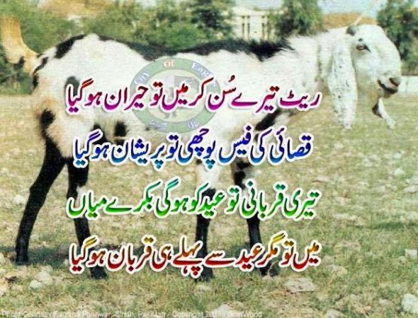 Funny Bakra Eid Air Media Design