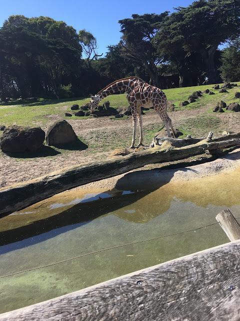 Sweet adorable giraffe