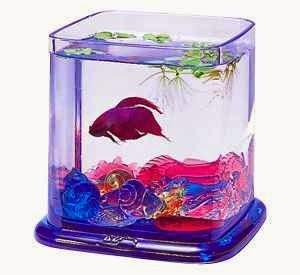 كيفيه تربيه أسماك الزينه وتجهيز الحوض لها بالصور