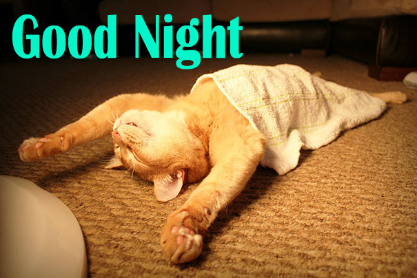 Funny Good Night Cat Image