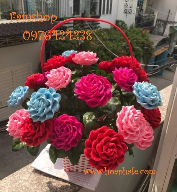 Hoa giay nhun o Ba Dinh