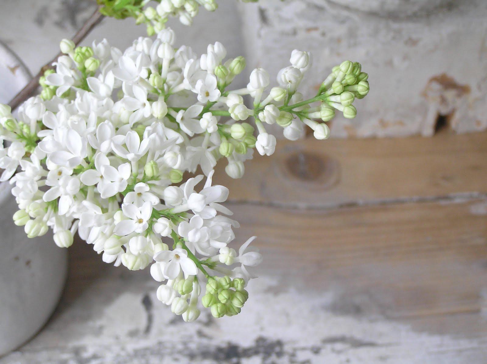 Pastels and Whites Seringen en oude stoelen Flowers and