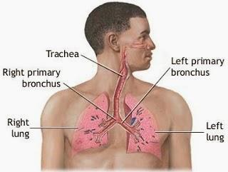 What Do Asbestosis Symptoms Consist Of?