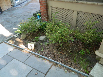 Davisville Mount Pleasant East New Front Shade Garden Before by Paul Jung Gardening Services--a Toronto Gardening Company