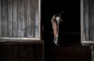 A bay horse with white markings with his head over a stable door in the dark