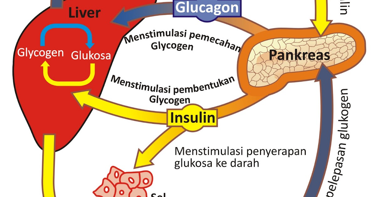 48++ Hormon yang dihasilkan pankreas inspirations