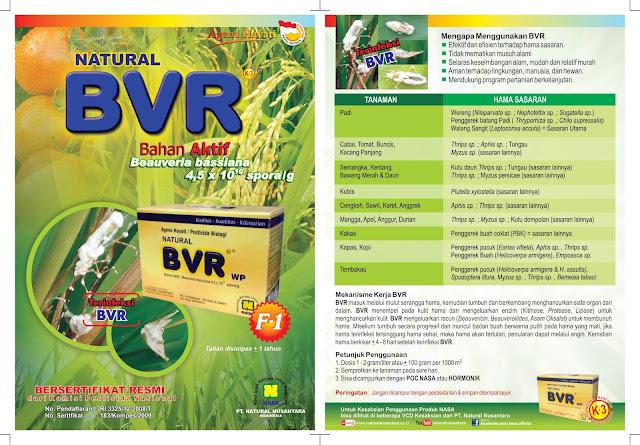 Mekanisme Kerja Natural BVR      Natural BVR masuk melalui mulut serangga hama, kemudian tumbuh dan berkembang menghancurkan sistem organ dari dalam.      BVR menempel pada kulit hama dan mengeluarkan enzim (Kitinase, Protease, Lipase) untuk menghancurkan kulit.      Produk Nasa BVR mengeluarkan racun (Beauvericin, Beauveroilides, Asam oksalat) untuk membunuh hama.      Miselium tumbuh secara progresif dan muncul badan buah berwarna putih pada hama yang mati, jika hama terinfeksi tersinggung hama sehat, maka hama akan tertulari, penularan dapat melalui angin.      Kematian hama berkisar + 4-8 hari setelah terinfeksi BVR.