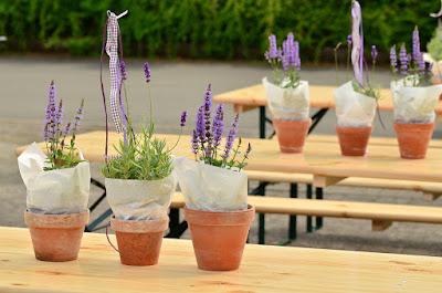 Lavender Tanaman Hias Indoor Dan Outdoor