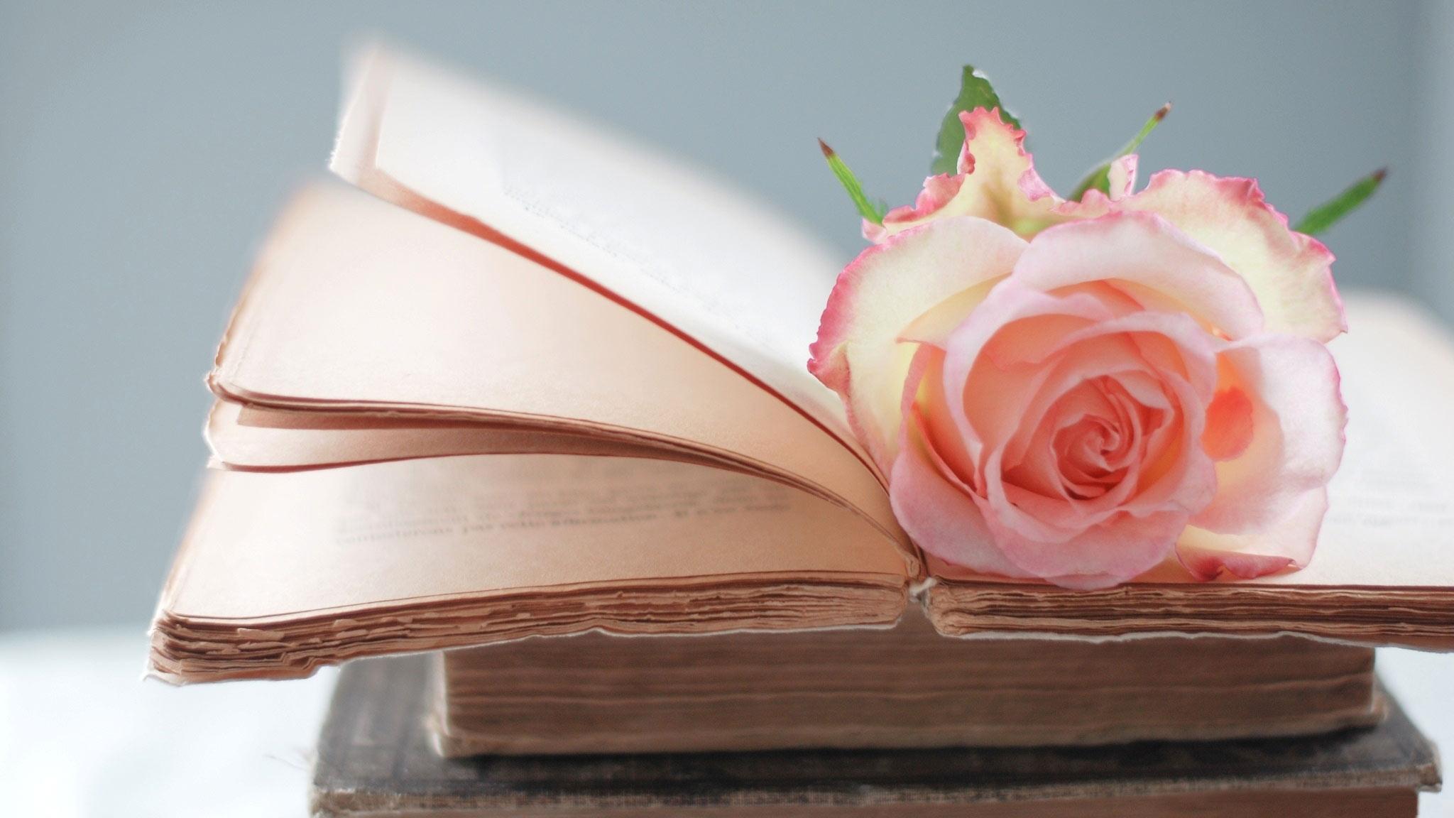 Papel de parede vintage flor rosa papel de parede gr tis for Planimetrie da 2500 piedi quadrati