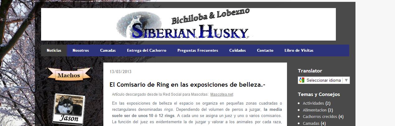 Nuevo Sitio Web del Criador de Husky Siberiano Bichiloba y Lobezno