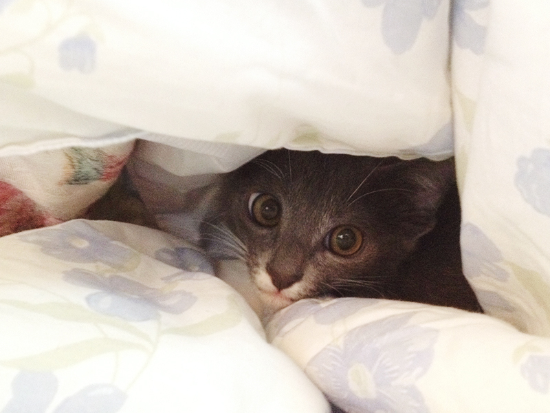 gato dexter