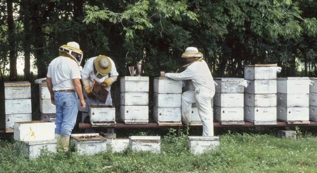 Μελισσοκομική μονάδα στη Καβάλα ζητάει άτομα για εργασία