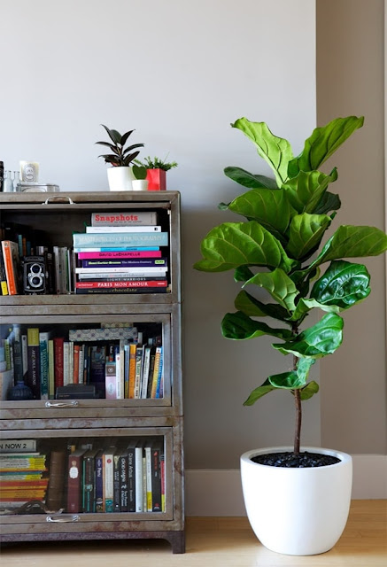 Ideas To Decorate Interiors With Plants 9