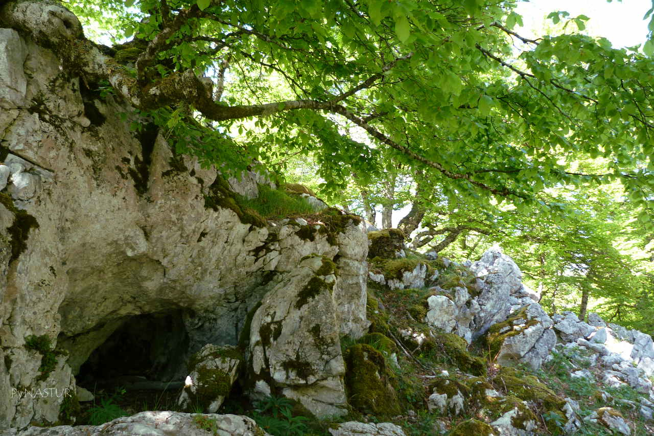 Hayedo Palomberu - Lagos de Covadonga