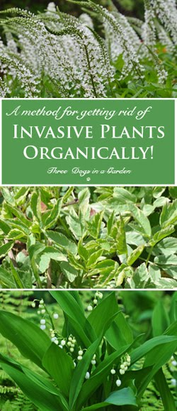 Invasive Plants, Part 3