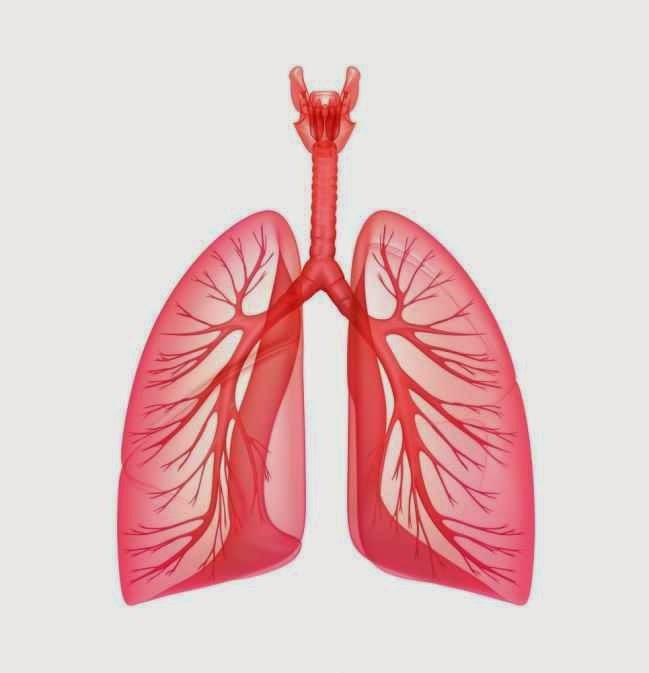 ماهى سعه الرئه الشامله لجسم الانسان Total Lung Capacity