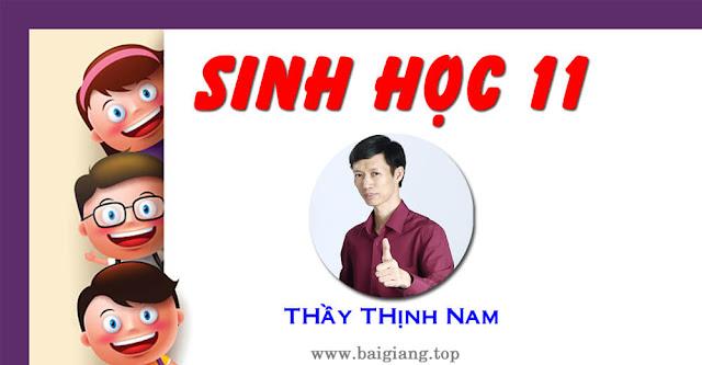 [Hoc24H] Chinh phục kiến thức SINH HỌC 11 - Thầy Thịnh Nam