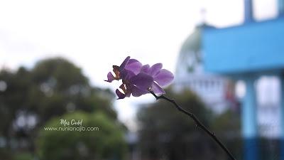 macro Photo