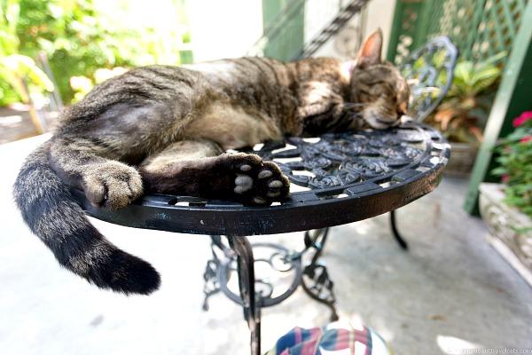 six toed cats ernest hemingway