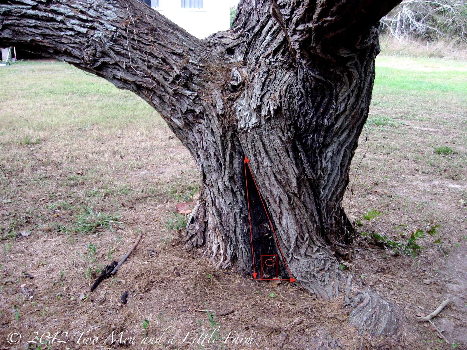 how to kill mother tree
