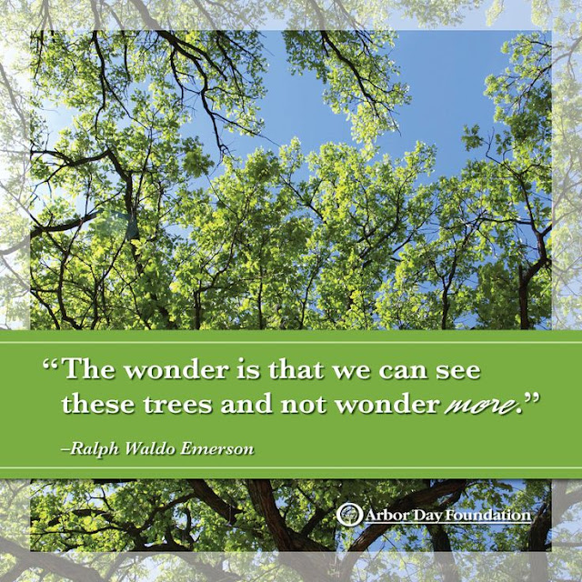 Arbor Day Quotes And Images Pictures 2017