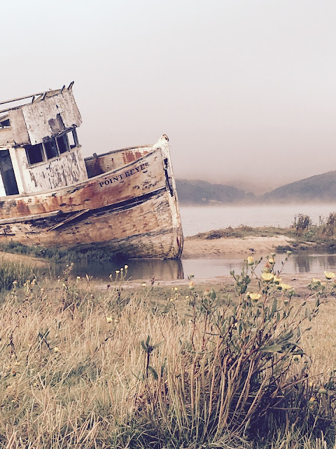 Point Reyes Shipwreck by Rachel Medanic