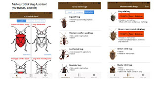 pages-of-stink-bugs