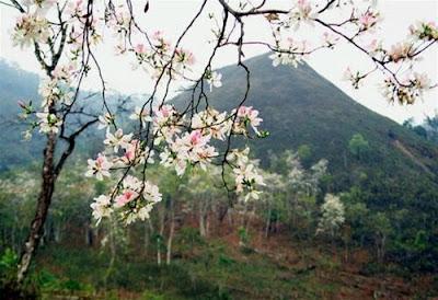 Image result for Mùa Xuân về anh sẽ hát bâng khuâng