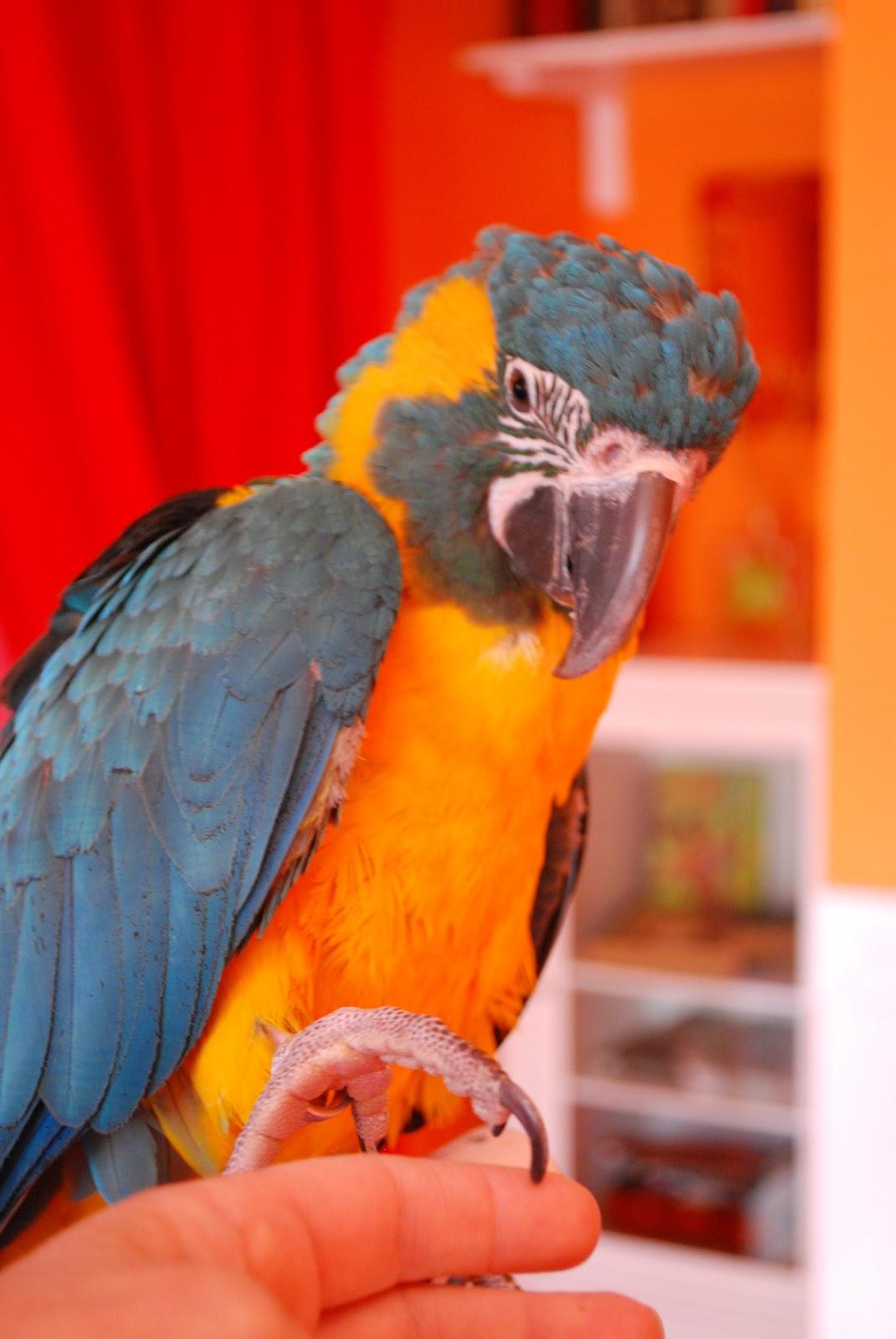 Barbara's Force Free Animal Training Talk: Help! My Parrot