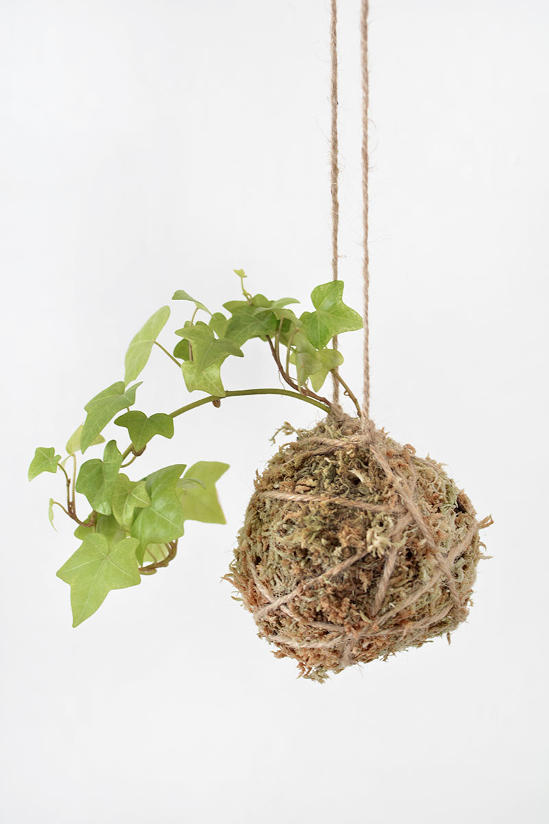diy string garden, small space ideas, indoor garden