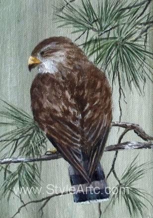 sharp-shinned hawk art