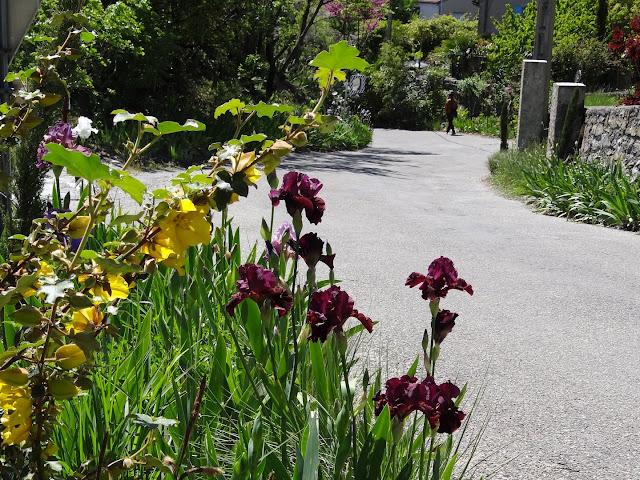 avril, jardin fébrile - Page 7 DSC07162