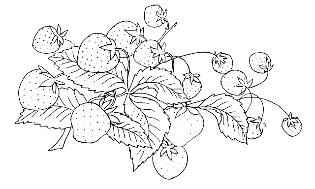 Strawberry Plant Coloring Coloring Pages