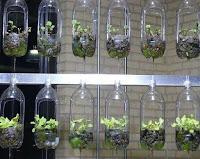 reciclar botellas de plastico para plantar lechuga