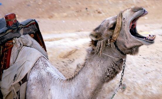 Antara Abu Lahab dan Abu Jahal, Siapa Sebenarnya Mereka?