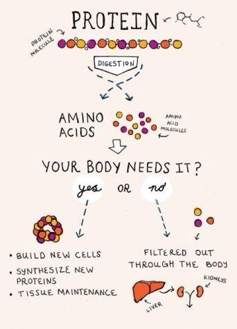 Forum - Mutation, ADN, Acide aminé, Protéine