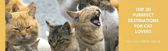 cats dubrovnik