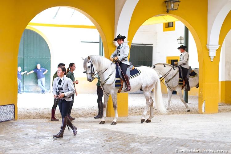 Andalusian kuninkaallinen hevoskoulu Jerez_Andalusian Royal Equestrian School Jerez_12