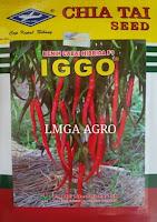 CABE KERITING IGGO, JUAL CABE IGGO, BELI CABE IGGO, AGEN CABE IGGO, LMGA AGRO