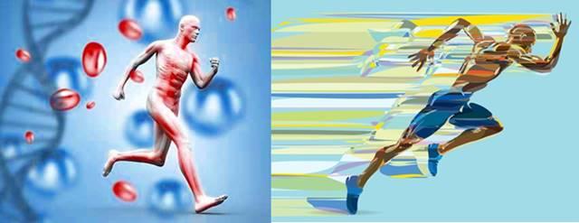 Genética y rendimiento deportivo