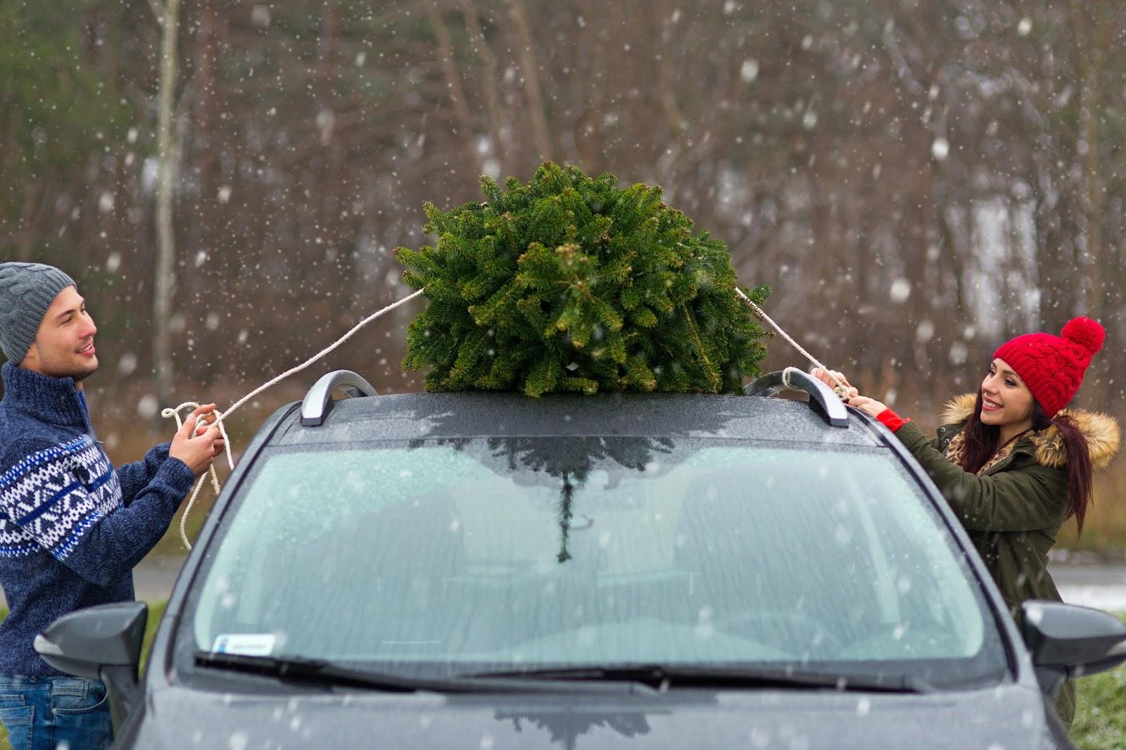 Auto Weihnachtsbaum.Ganz Sicher Der Weihnachtsbaum Muss Mit Ins Auto Doch Richtig