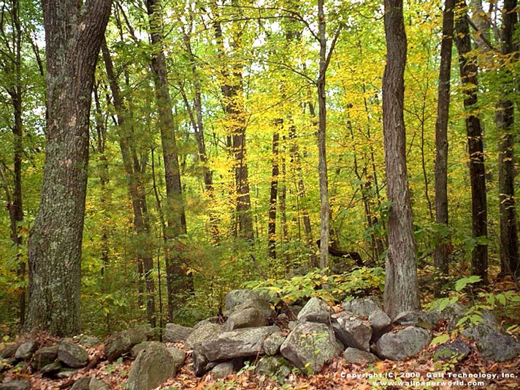3d wallpaper trees - photo #16