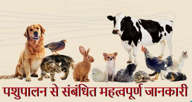 Important Information Related to Animal Husbandry