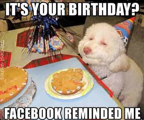 dog funny birthday memes for friend