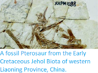 http://sciencythoughts.blogspot.co.uk/2014/05/a-fossil-pterosaur-from-early_8.html
