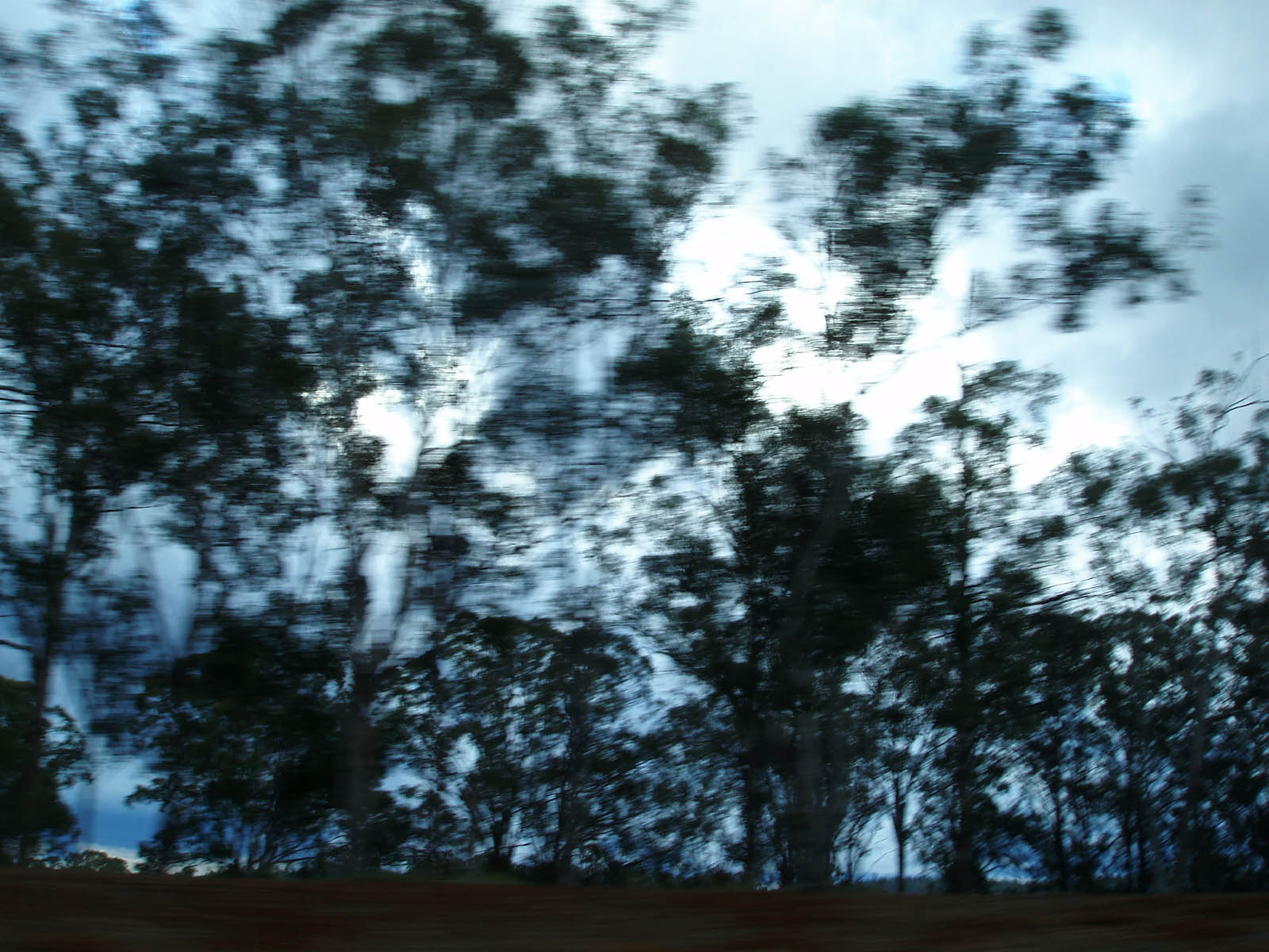 wallpapers: Blurry Trees