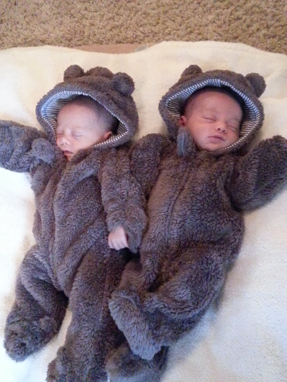 Little bears