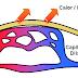 O que é vasodilatação?
